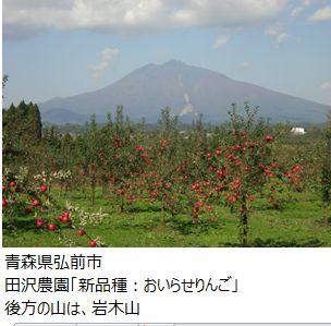 ota_iwaki_apple.JPG