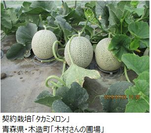 ota_takami_melon.JPG