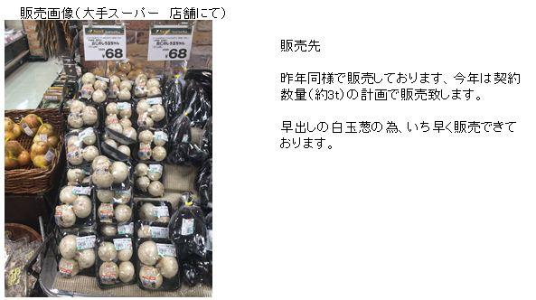 shiratamanegi2.JPG