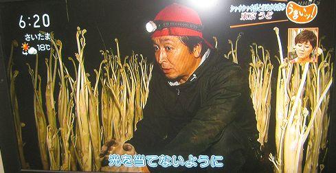 yamashita_1.JPG
